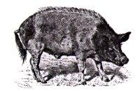 hussvin